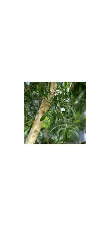 http://www.horsessentials.com/145-thickbox_default/tea-tree.jpg